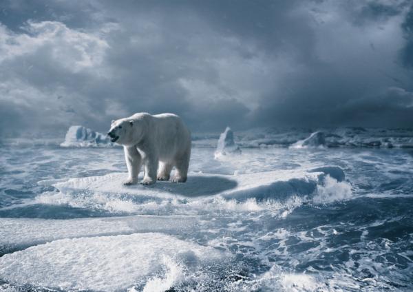 host_of_arctic_by_vitashuba-d7btgxa