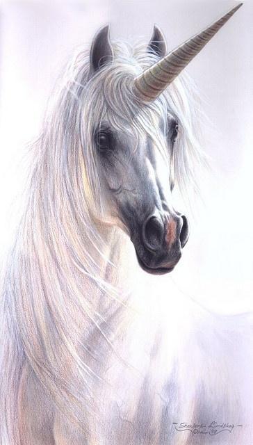 Unicorn by pony.gallery on