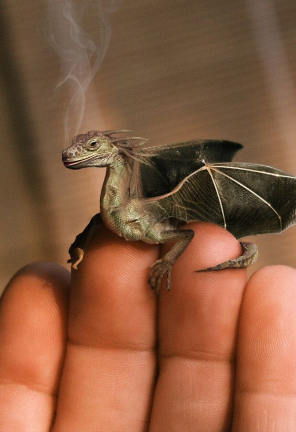Baby dragon!
